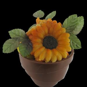 bloempotje met zonnebloem