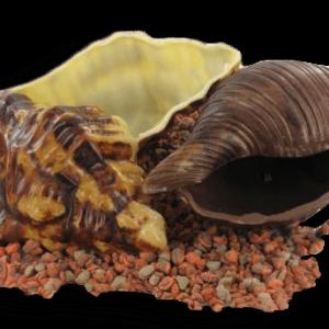 schelpen in chocolade